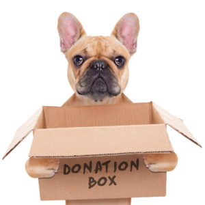 Dog with Donation Box